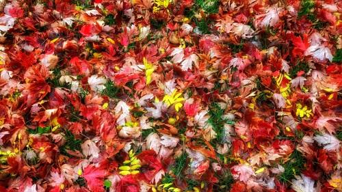 leavessmall2